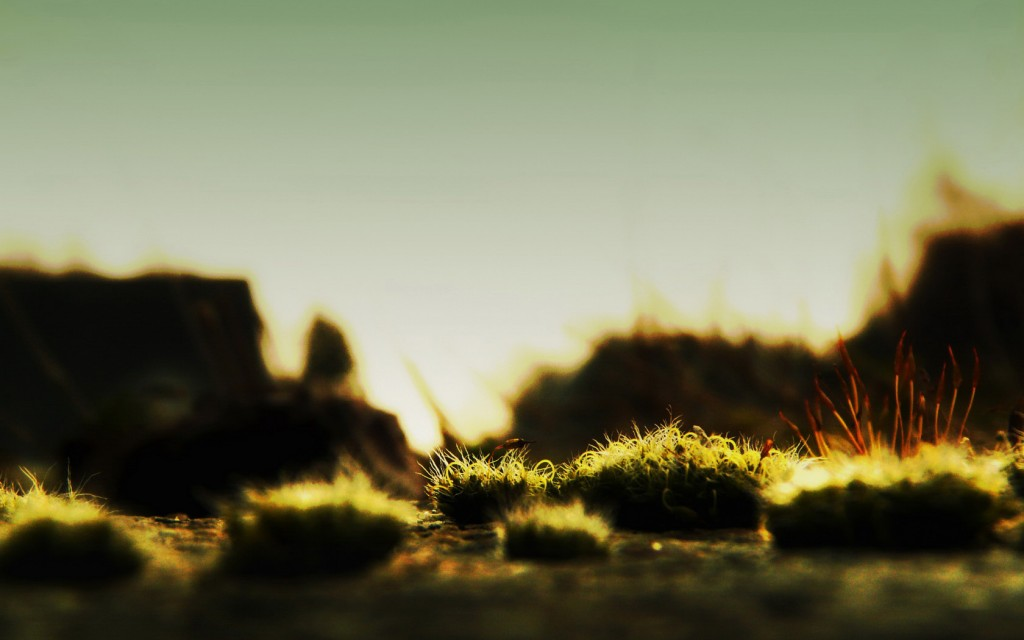 moss-pictures-38570-39451-hd-wallpapers