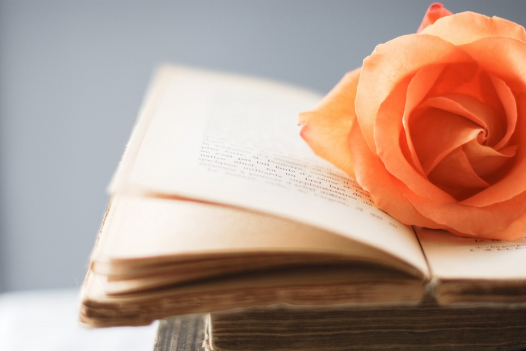 orange-rose-on-book-pages-wallpaper-49792-51471-hd-wallpapers
