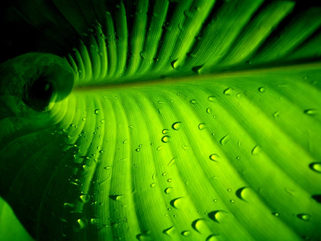 palm-leaf-27158-27875-hd-wallpapers