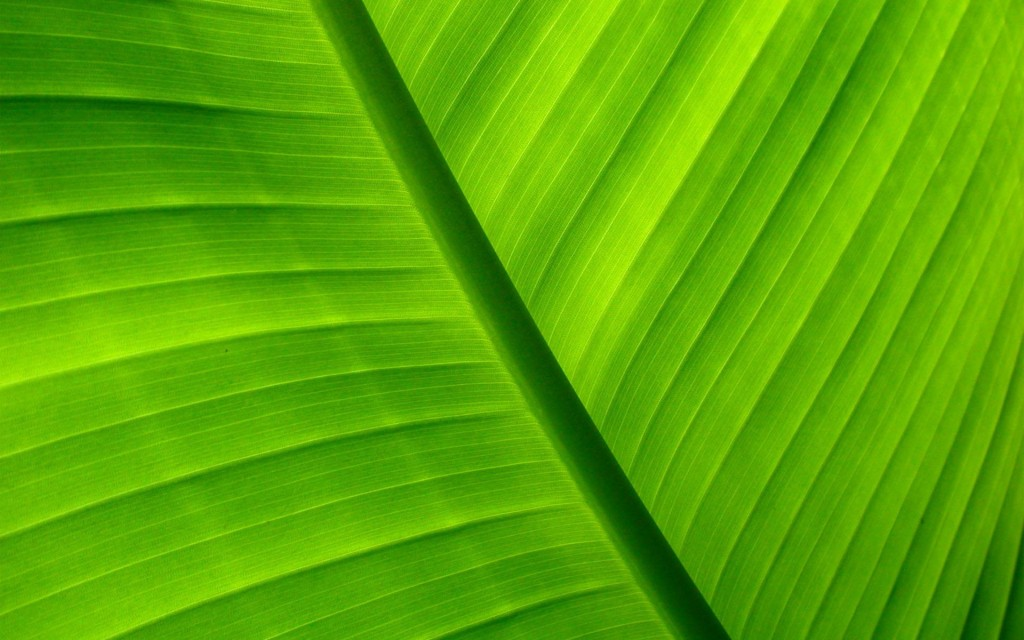 11 Lovely HD Palm Leaf Wallpapers