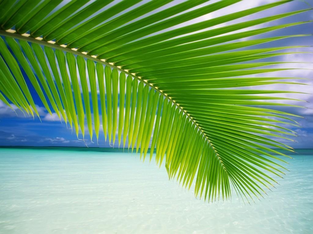 palm-leaf-wallpaper-27159-27876-hd-wallpapers