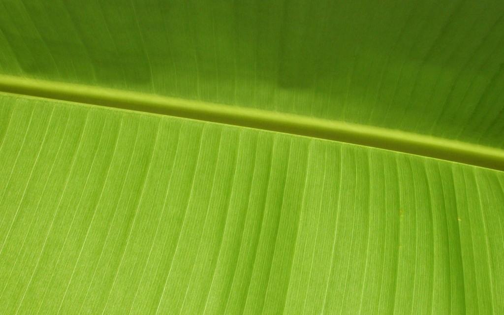 palm-leaf-wallpaper-27164-27881-hd-wallpapers