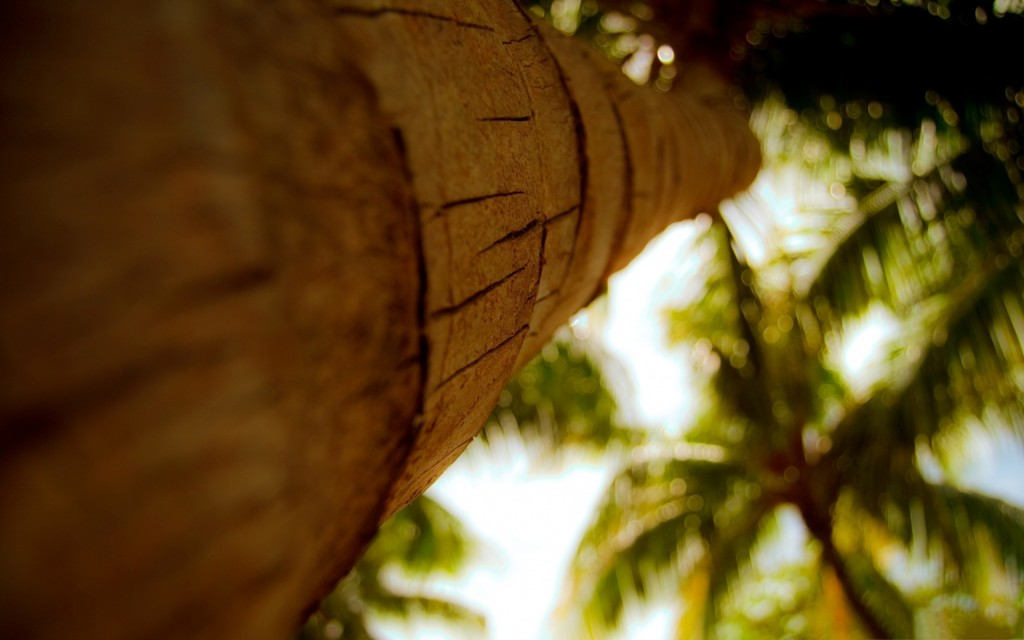 palm-tree-trunk-wallpaper-background-49773-51452-hd-wallpapers