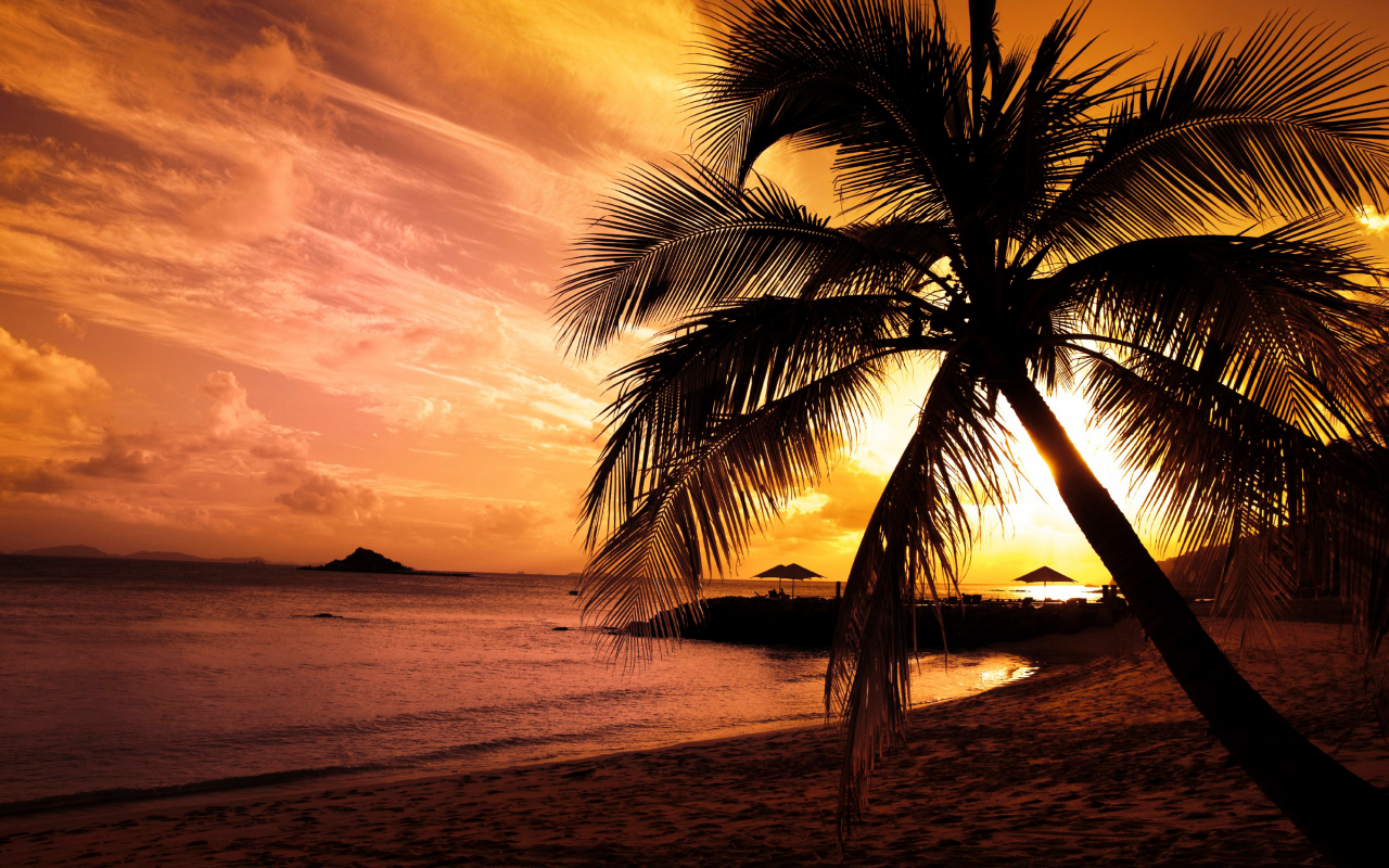10 Most Popular Beautiful Beach Backgrounds Palm Trees: 15 Wonderful HD Palm Tree Wallpapers