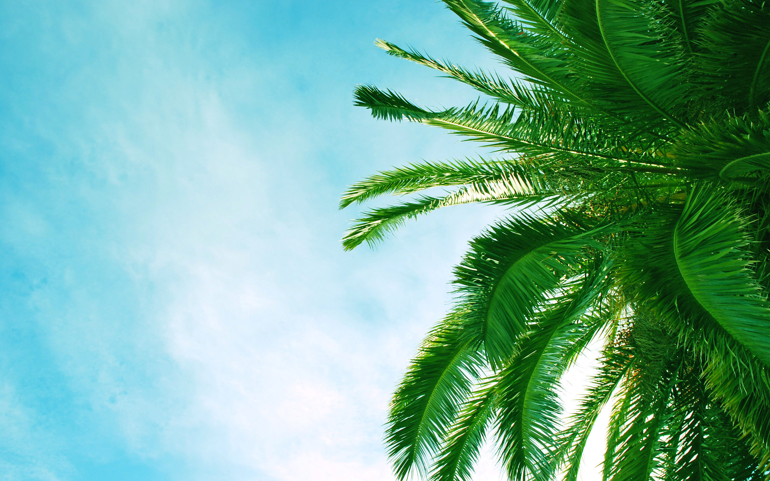 15 wonderful hd palm tree wallpapers