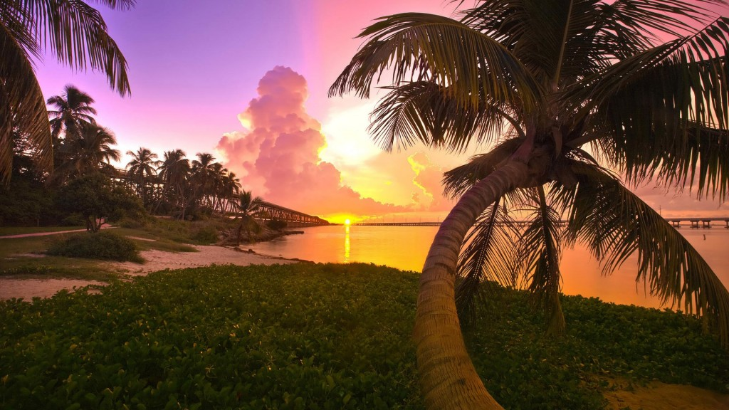 palm-tree-wallpapers-22008-22564-hd-wallpapers
