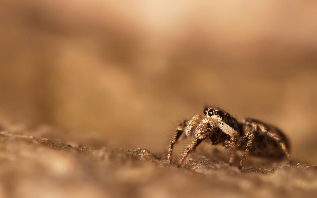 spider-wallpaper-23753-24408-hd-wallpapers