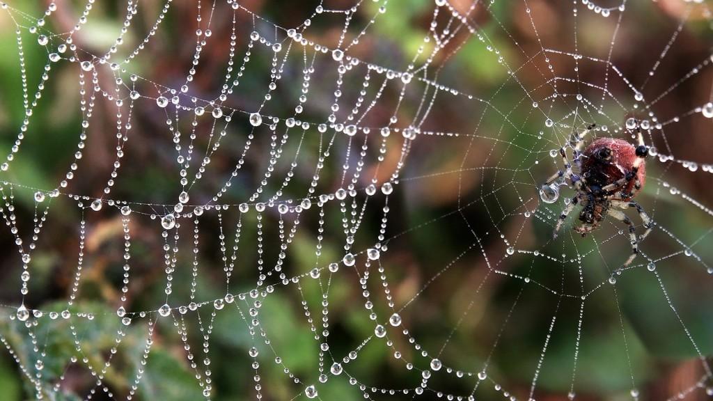 spider-wallpaper-23757-24412-hd-wallpapers