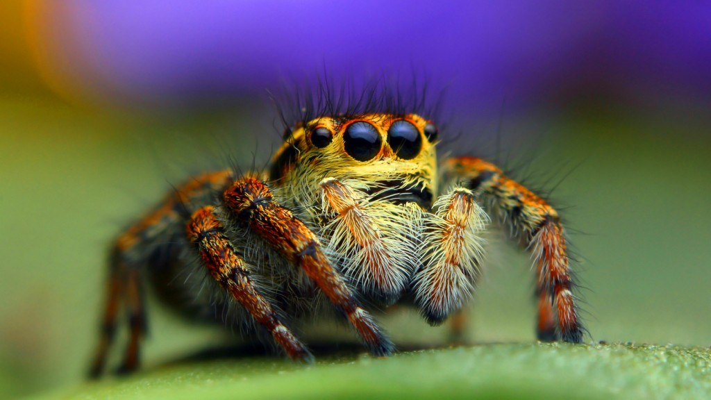spider-wallpaper-pictures-49667-51343-hd-wallpapers