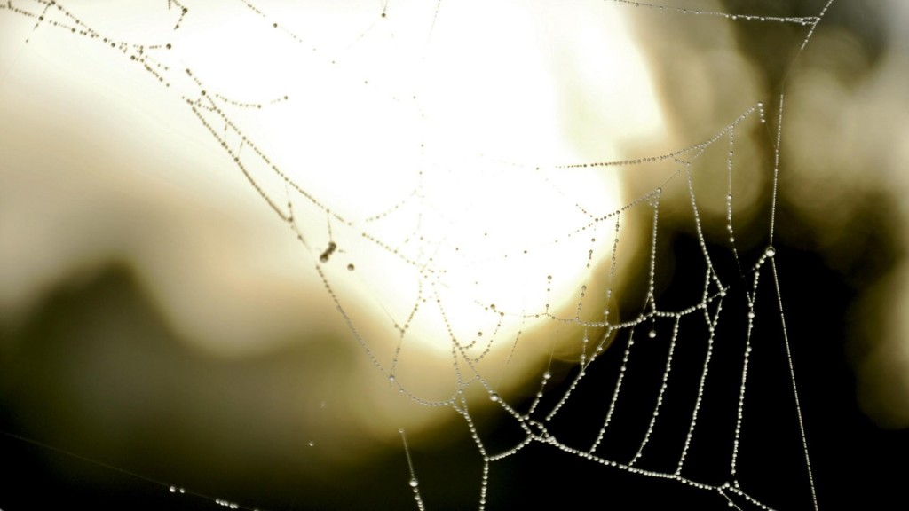 spider-web-photography-wallpaper-49623-51299-hd-wallpapers