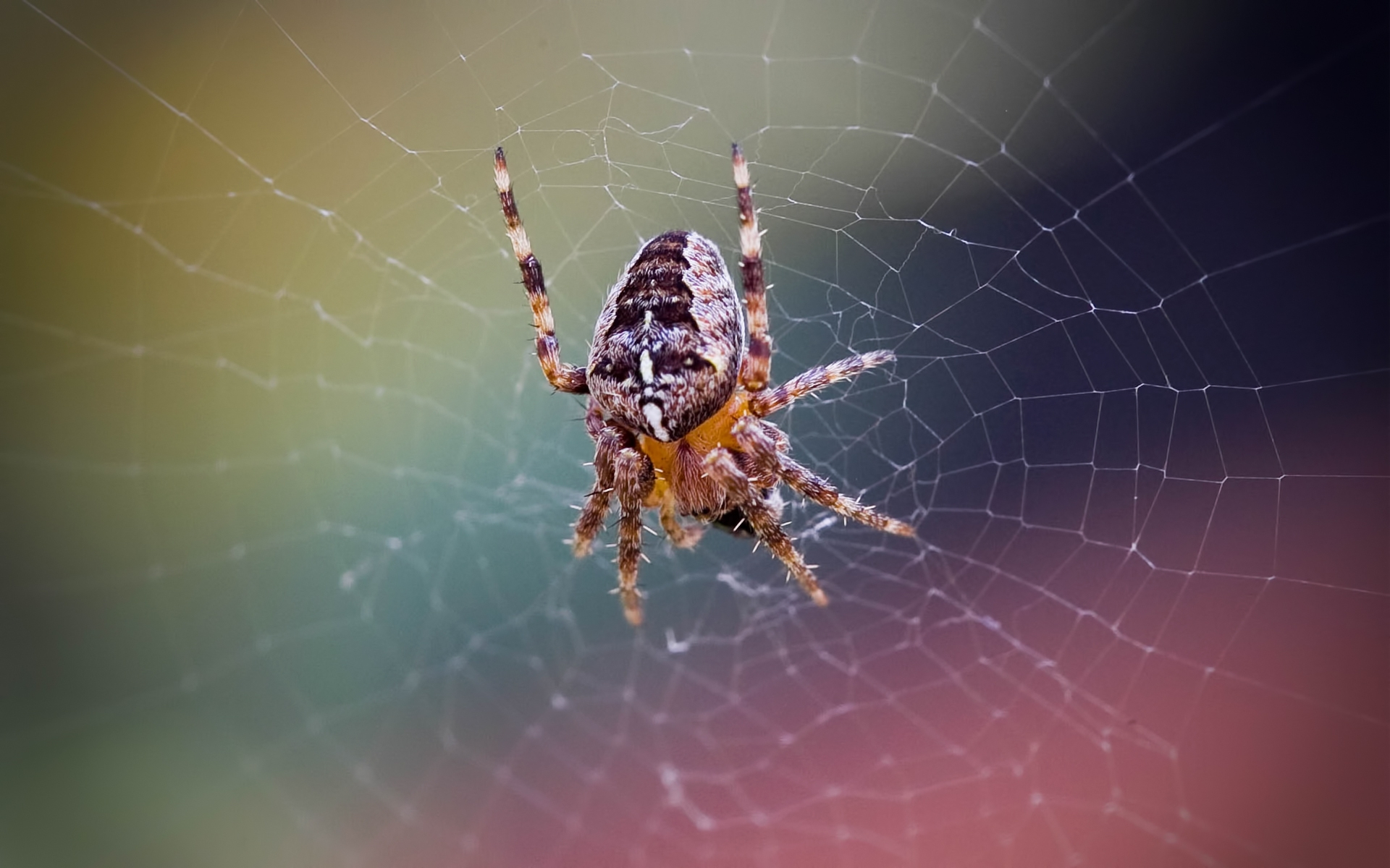 21 excellent hd spider web wallpapers