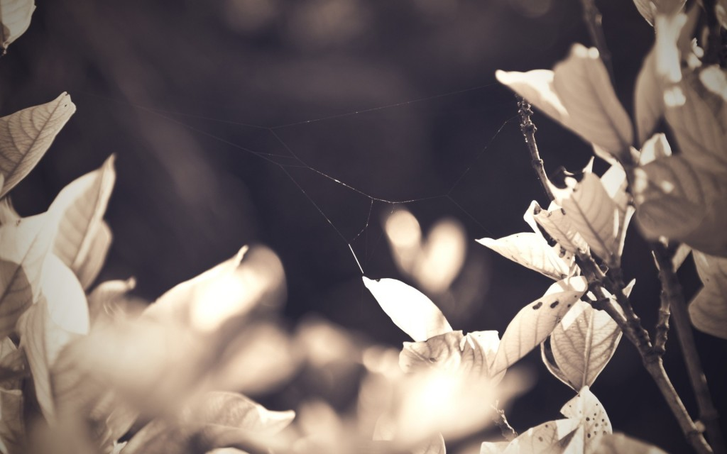 spider-web-wallpaper-45709-46960-hd-wallpapers