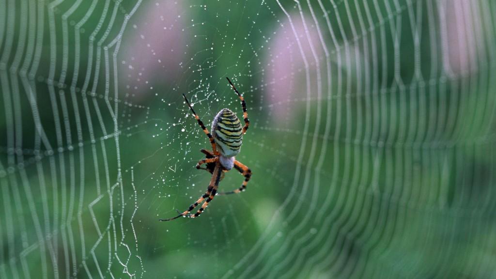 spider-web-wallpaper-49622-51298-hd-wallpapers