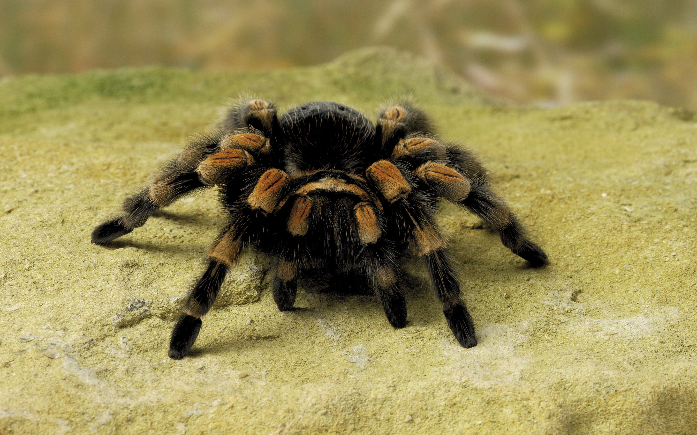 14 fantastic hd spider wallpapers