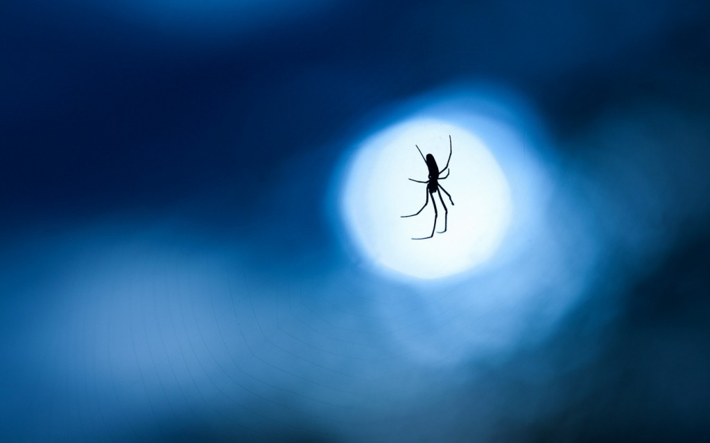 stunning-spider-web-wallpaper-41575-42551-hd-wallpapers