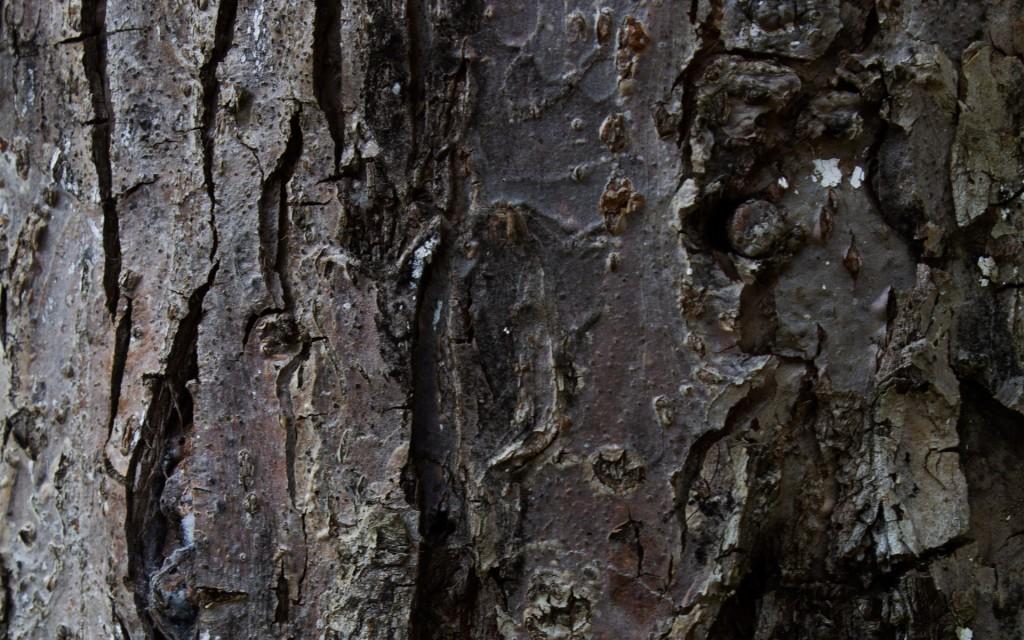 tree-bark-26073-26758-hd-wallpapers
