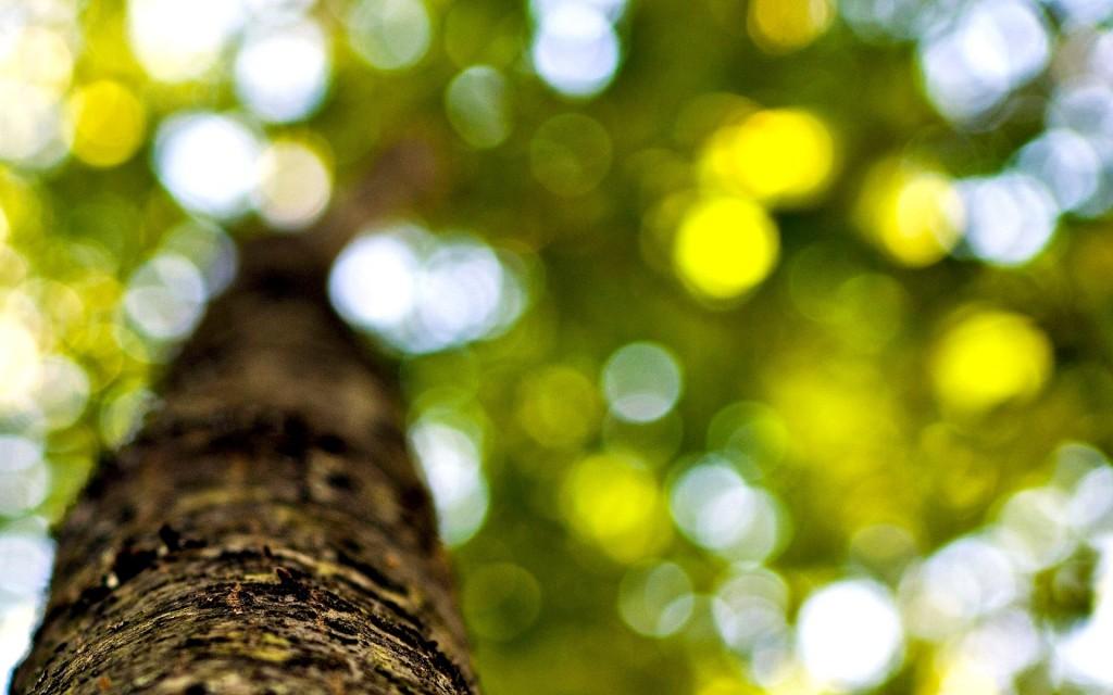 tree-bark-close-up-wallpaper-49760-51439-hd-wallpapers