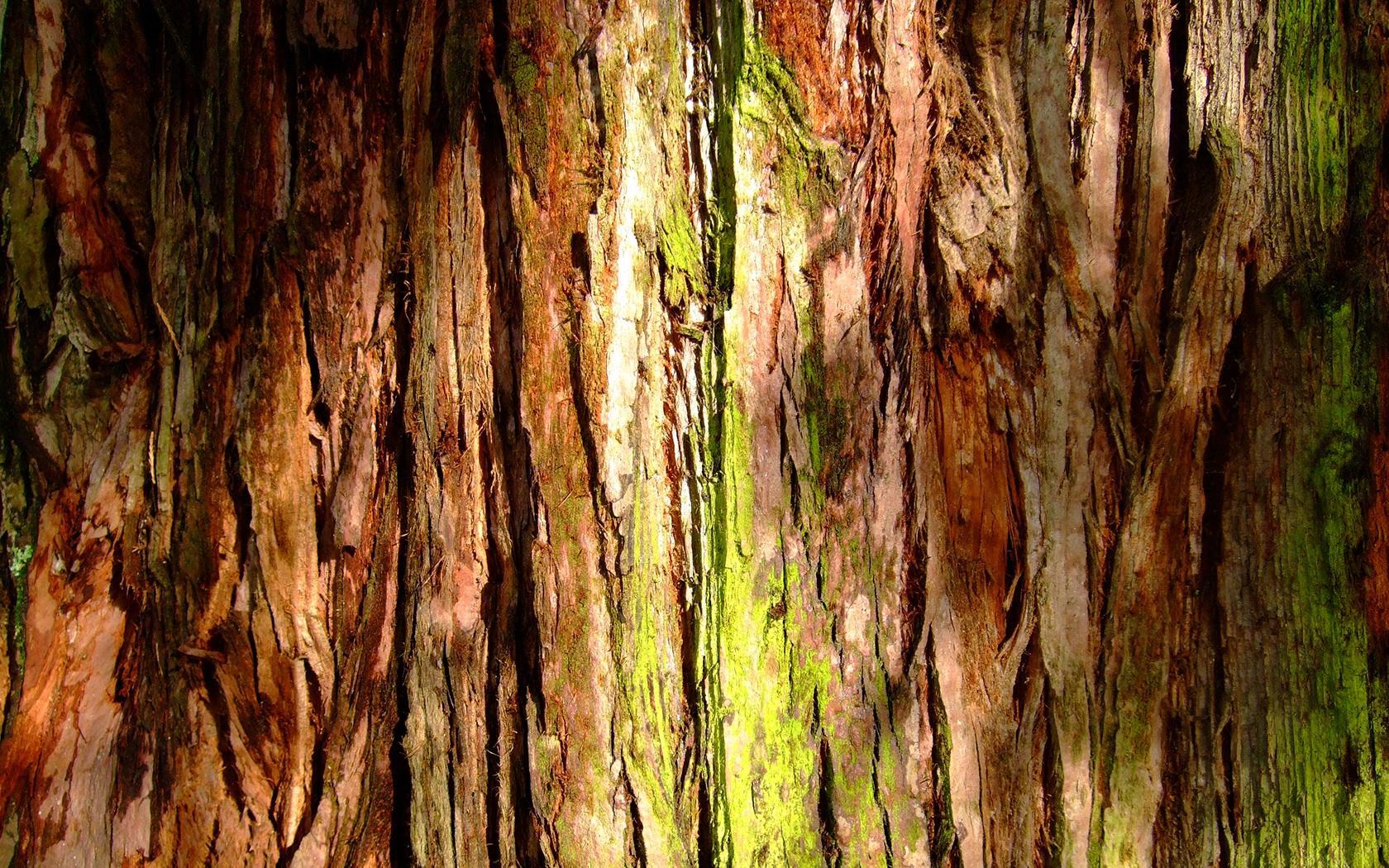 17 fantastic hd tree bark wallpapers hdwallsourcecom