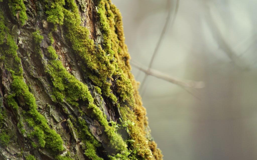 tree-bark-wallpaper-26068-26753-hd-wallpapers