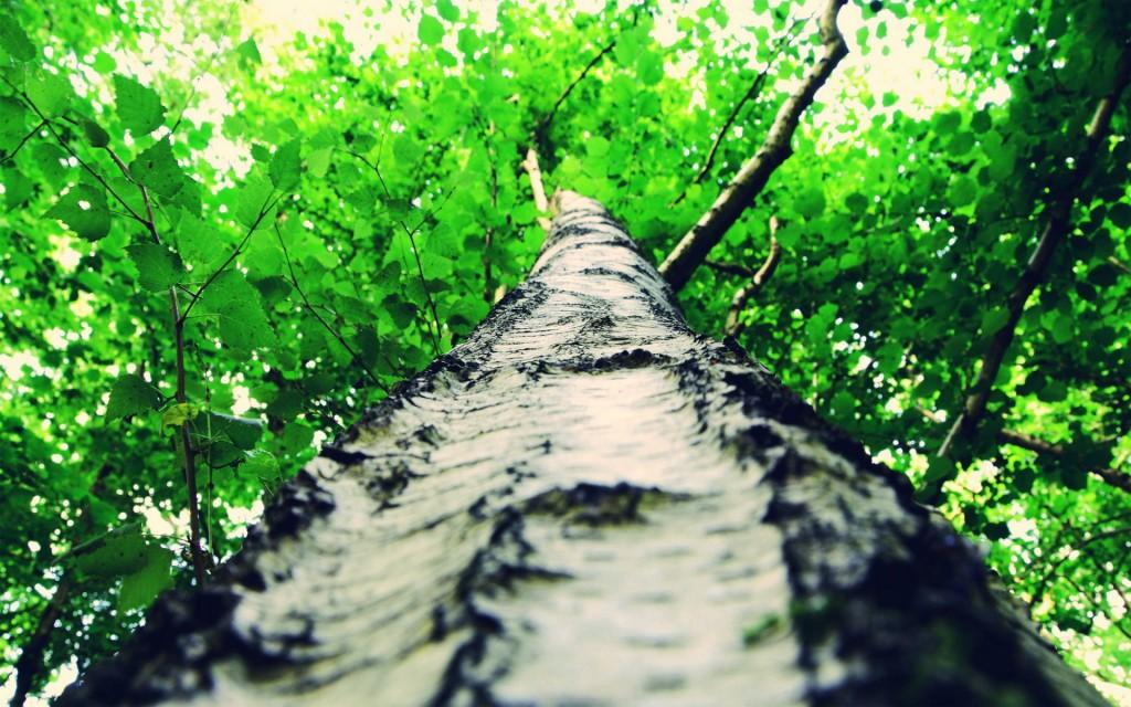 tree-bark-wallpaper-46054-47340-hd-wallpapers
