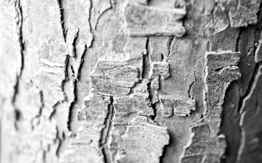 tree-bark-wallpaper-49764-51443-hd-wallpapers
