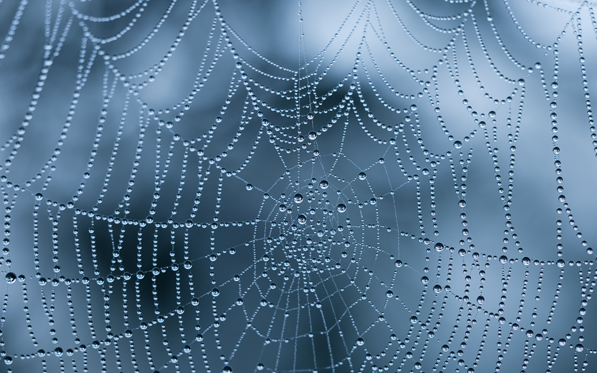 Spider Web Wallpapers Archives - HDWallSource.com