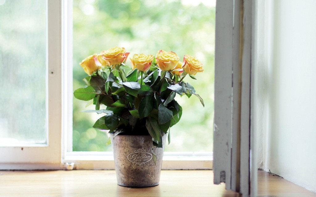 windowsill-38623-39506-hd-wallpapers