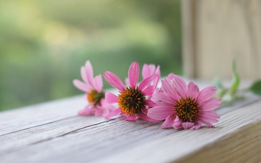 windowsill-flowers-computer-wallpaper-49671-51347-hd-wallpapers