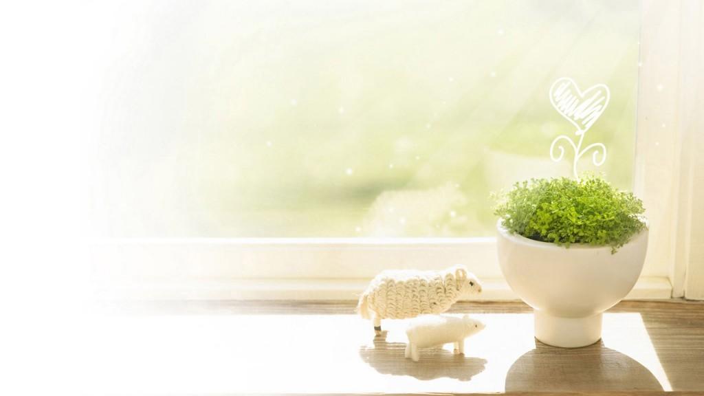 windowsill-widescreen-wallpaper-49670-51346-hd-wallpapers