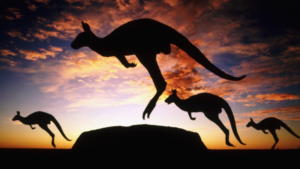 awesome-kangaroo-wallpaper-23906-24562-hd-wallpapers