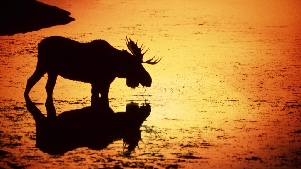 awesome moose wallpapers