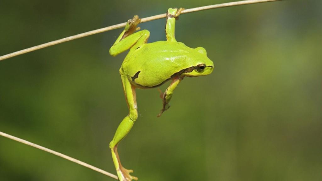 cool-green-frog-wallpaper-33415-34172-hd-wallpapers
