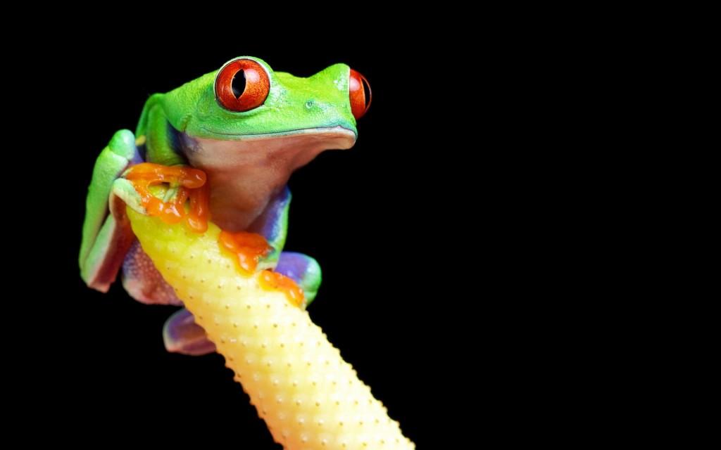 frog desktop wallpapers