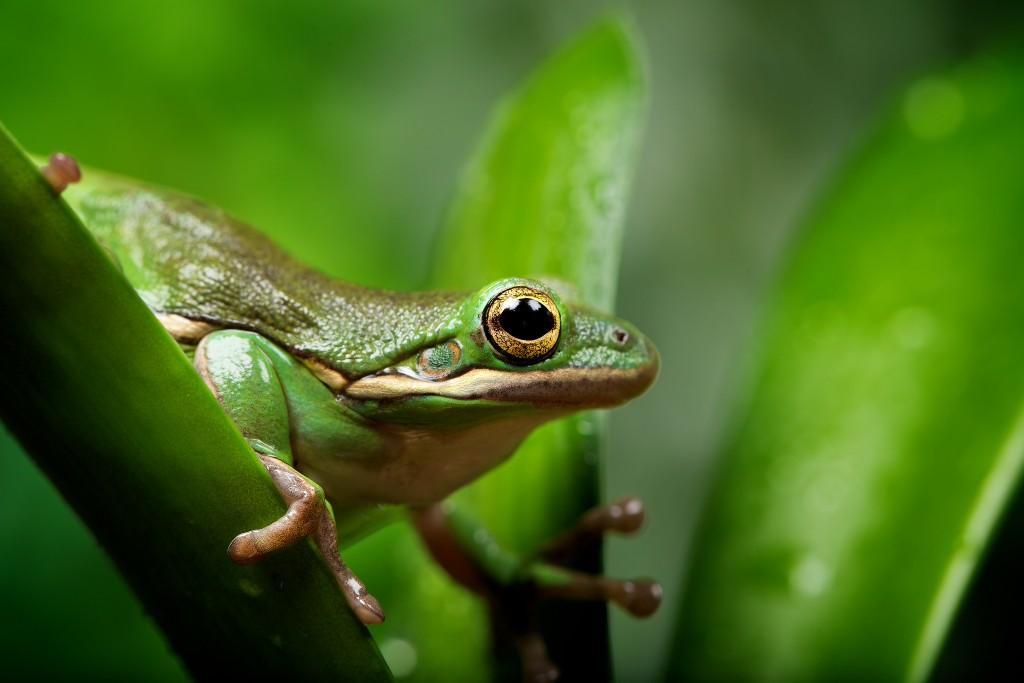 frog pictures wallpapers