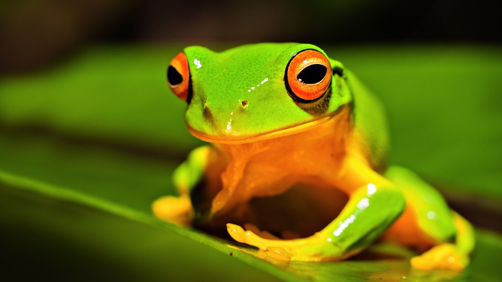 green-frog-background-33410-34167-hd-wallpapers