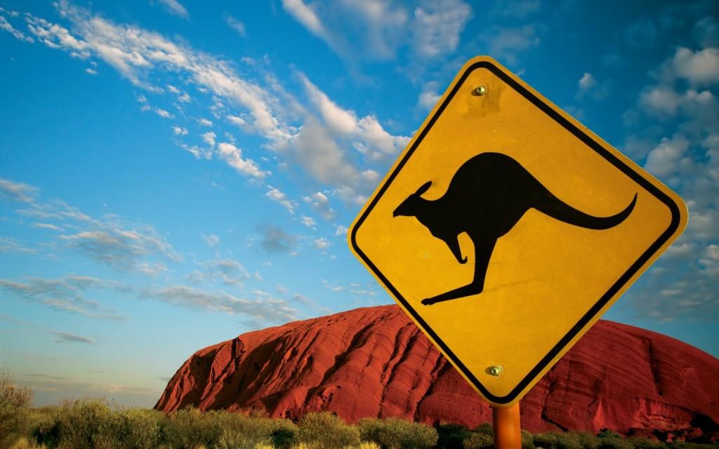 kangaroo-wallpaper-23902-24558-hd-wallpapers