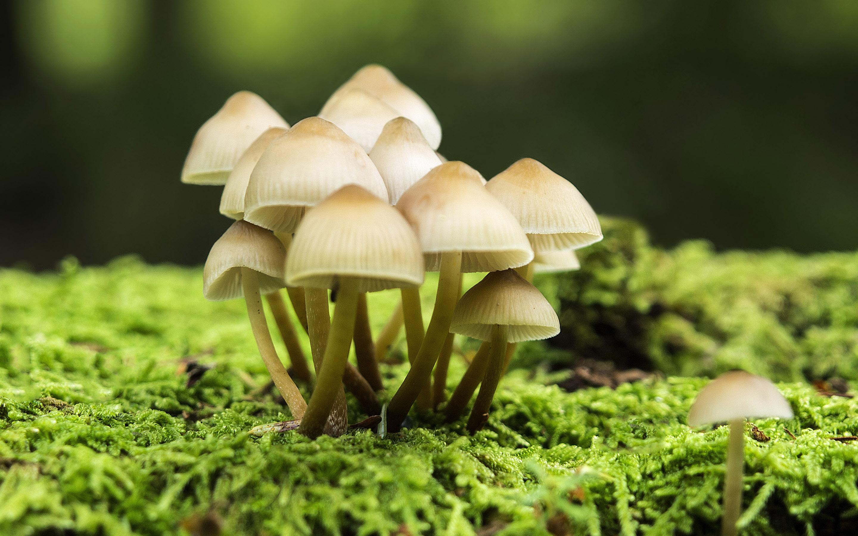 31 Excellent Hd Mushroom Wallpapers