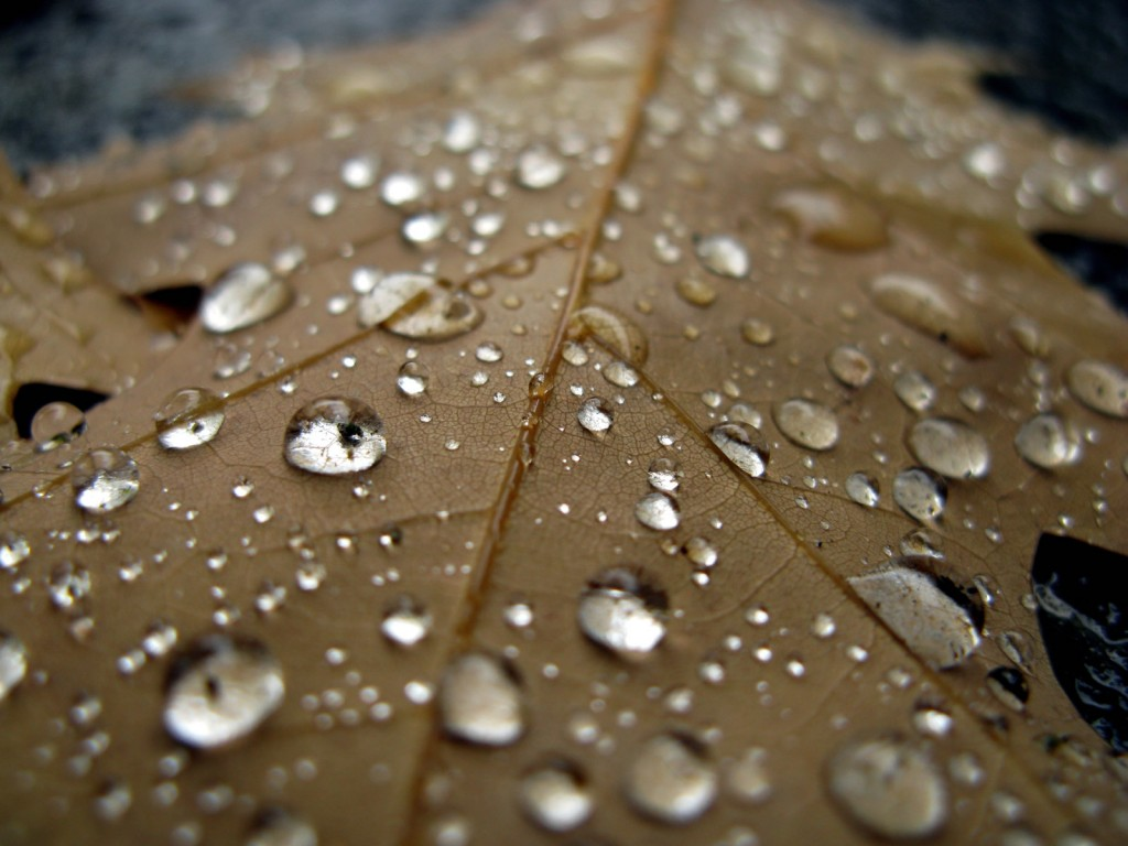 raindrops-hd-39885-40814-hd-wallpapers