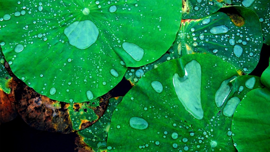 raindrops-wallpaper-39891-40820-hd-wallpapers