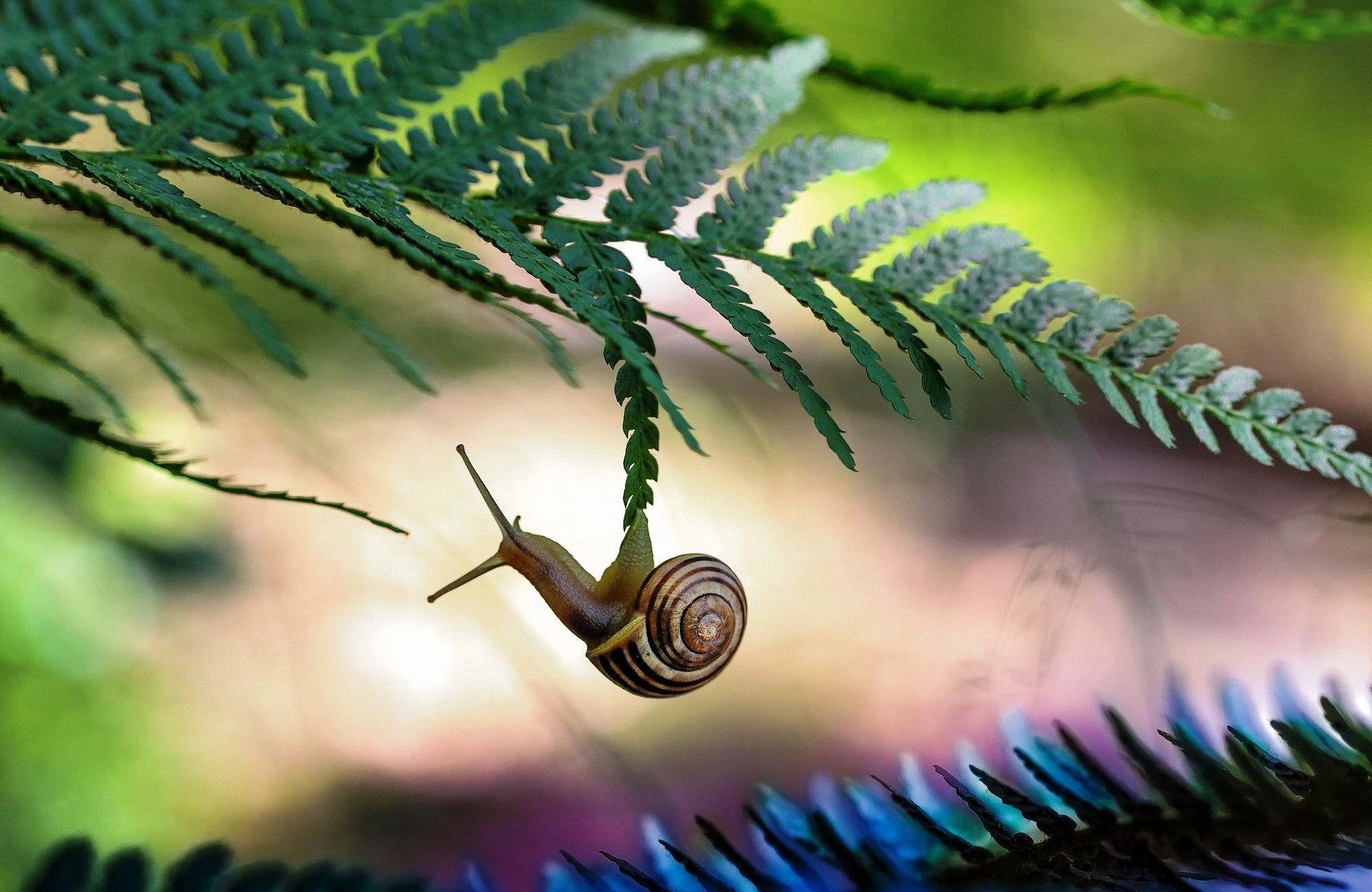 36 excellent hd snail wallpapers