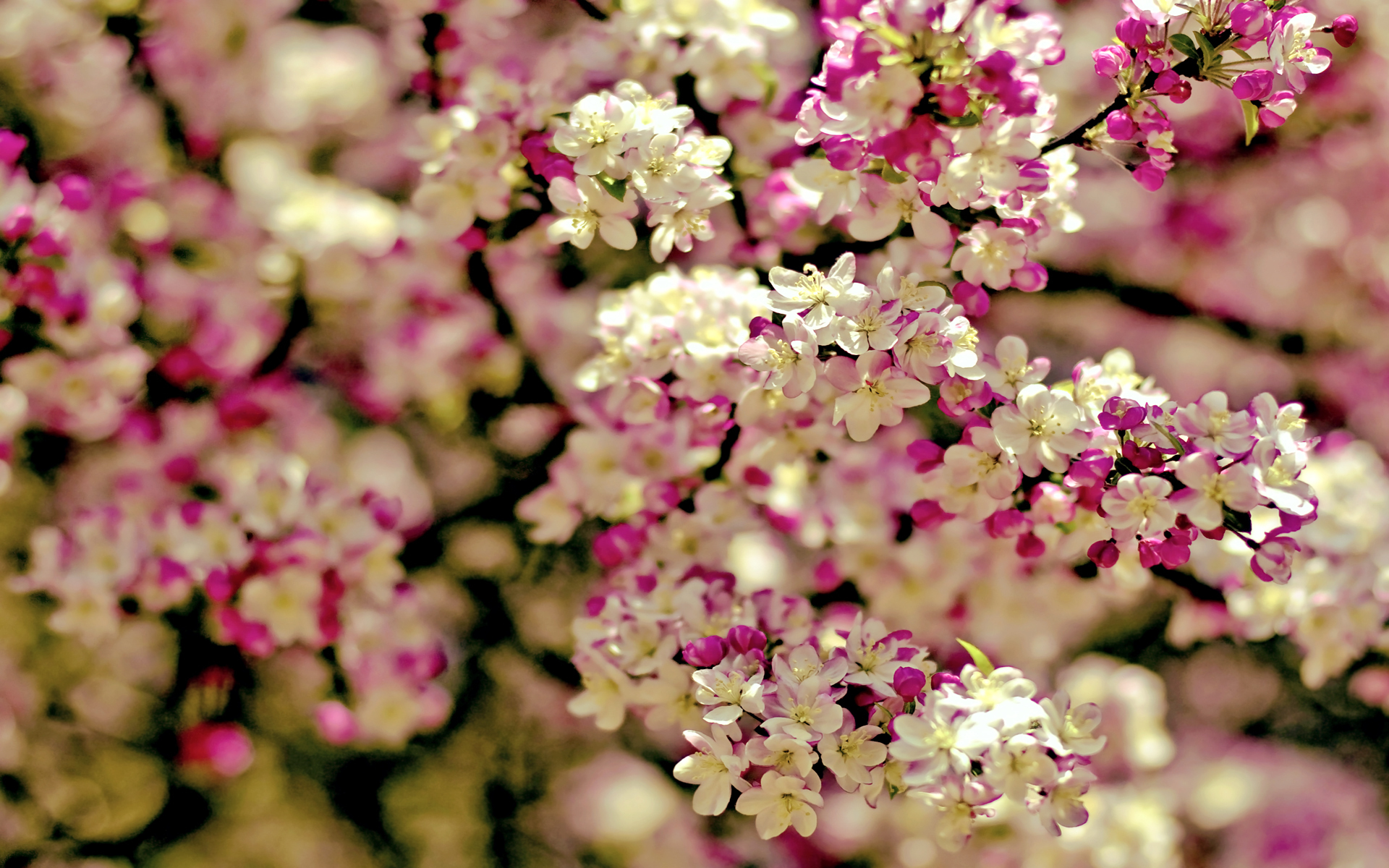 29 Wonderful Hd Sakura Wallpapers