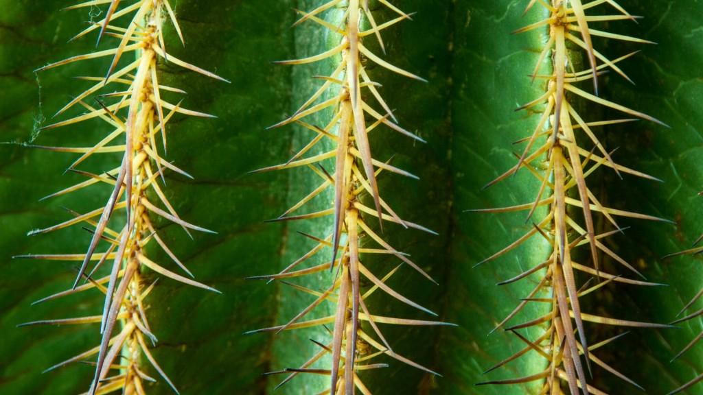 cactus texture desktop wallpapers