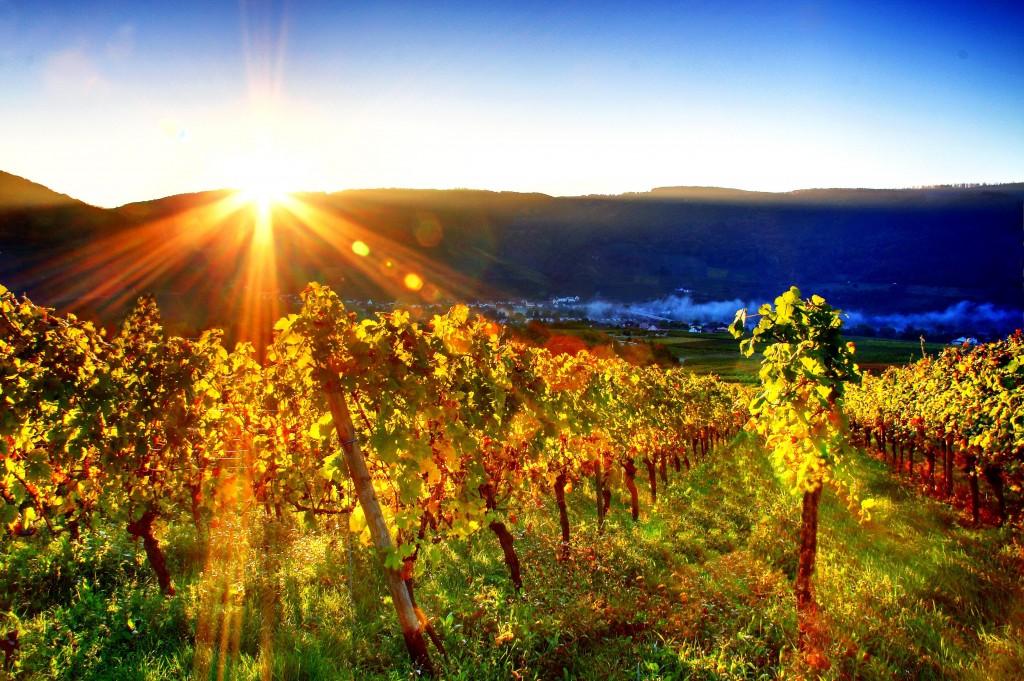 free vineyard wallpapers