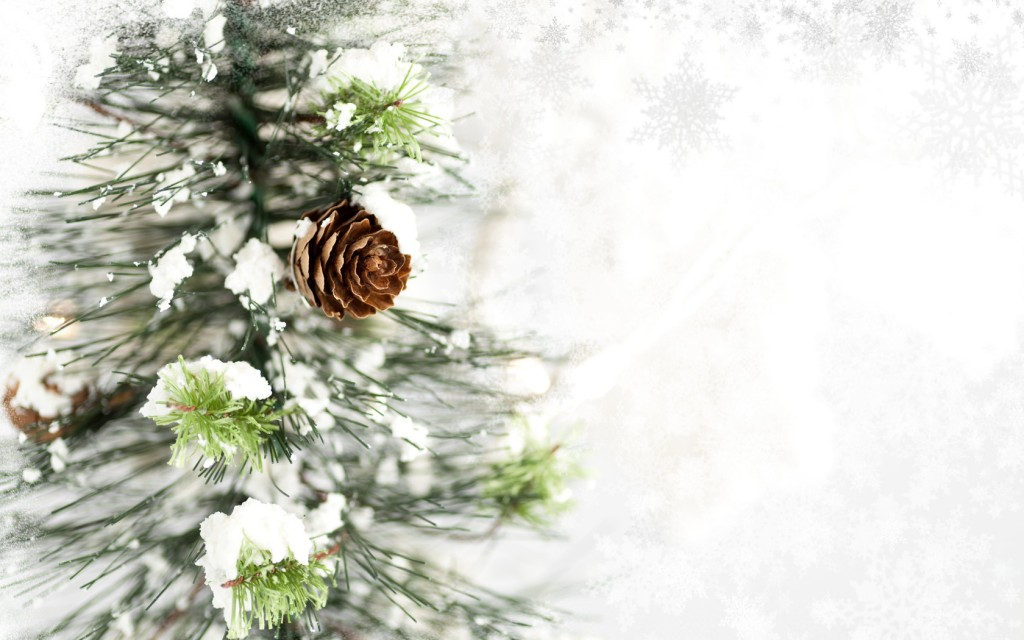 pine cone computer wallpapers