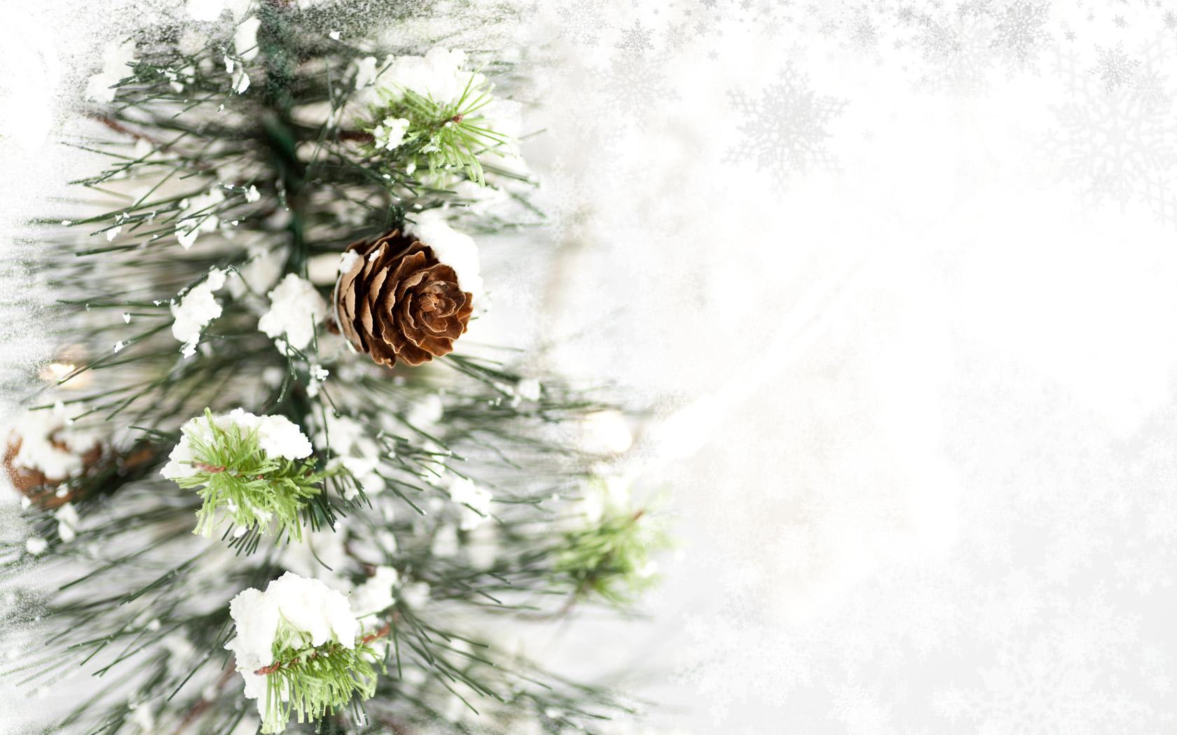 13 wonderful hd pine cone wallpapers