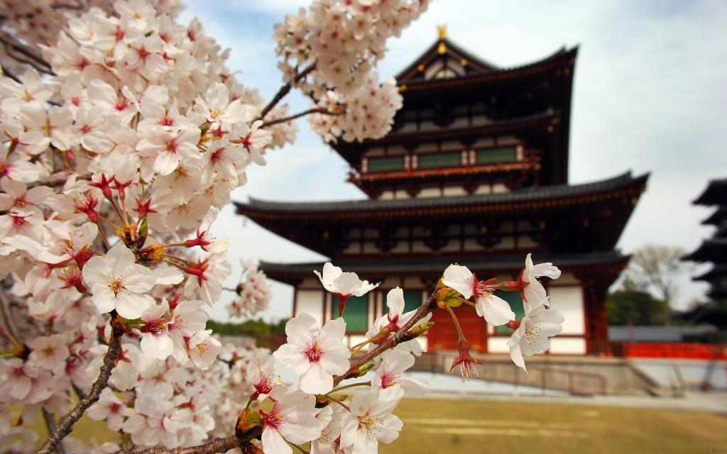sakura-flower-20973-21510-hd-wallpapers