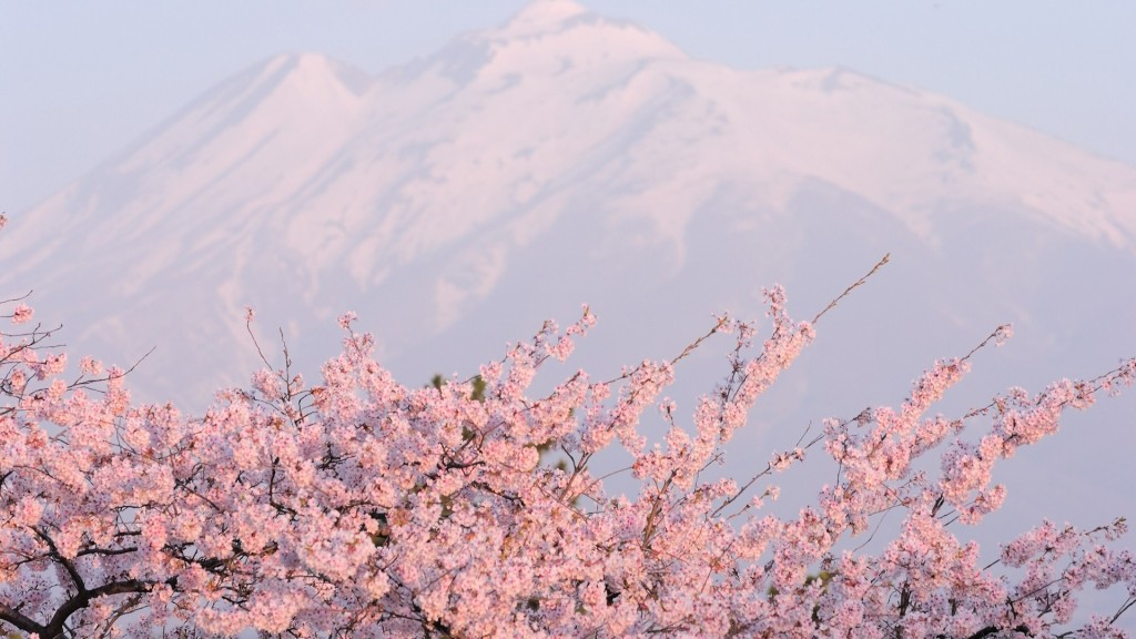 sakura-flower-20975-21512-hd-wallpapers