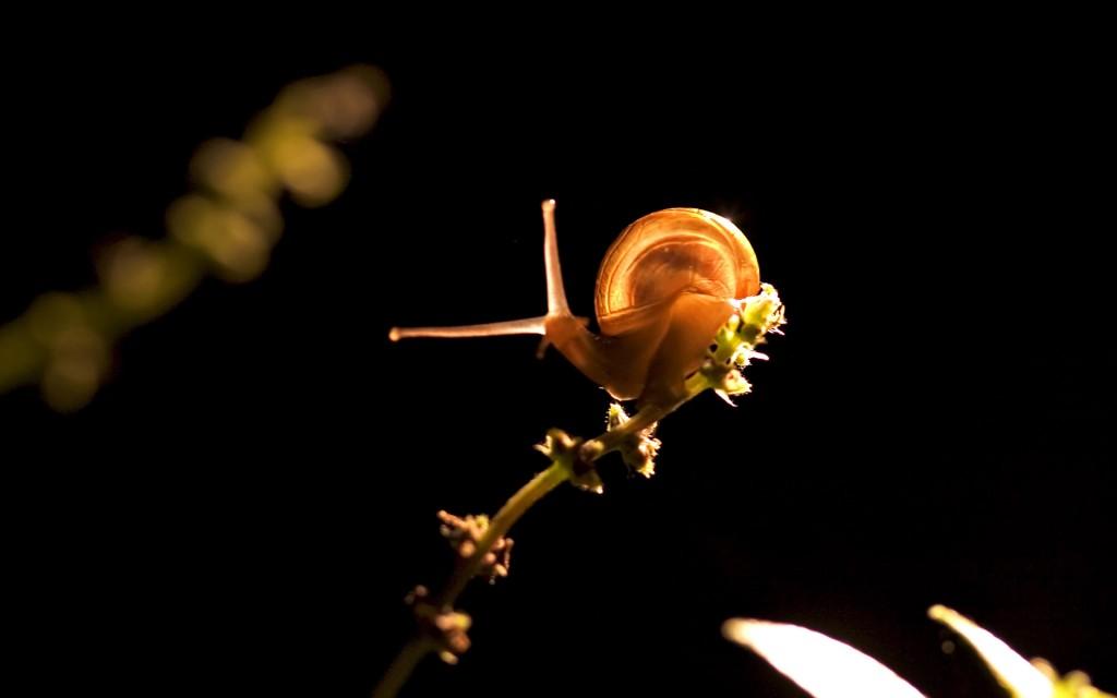 snail animal wallpapers