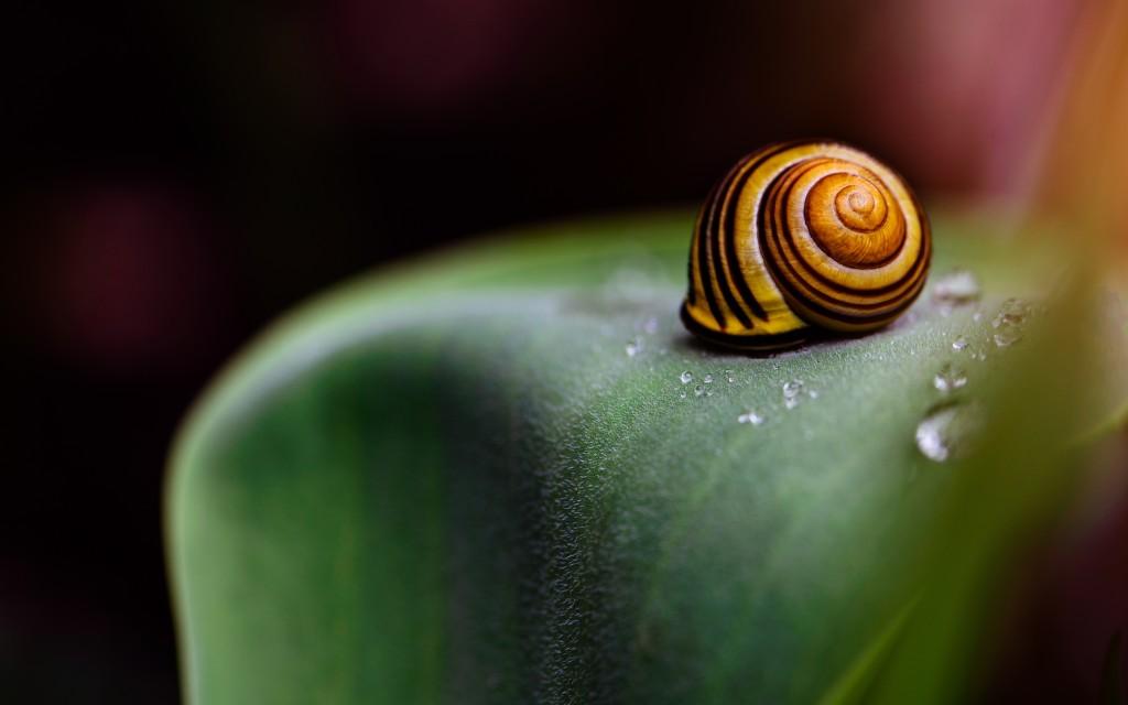 snail-animal-wide-wallpaper-51249-52945-hd-wallpapers