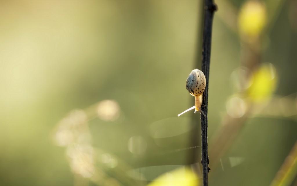 snail desktop wallpapers
